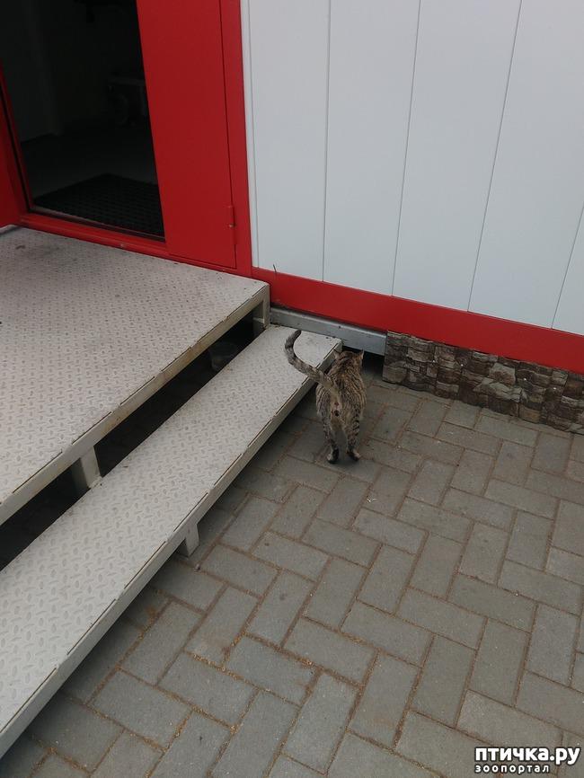 фото 2: Еще раз о потерявшейся трехцветной кошке в Самаре. Или Fifa.