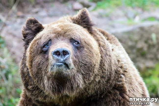фото 2: У животных тоже бывают фотографии, которые они захотели бы срочно удалить