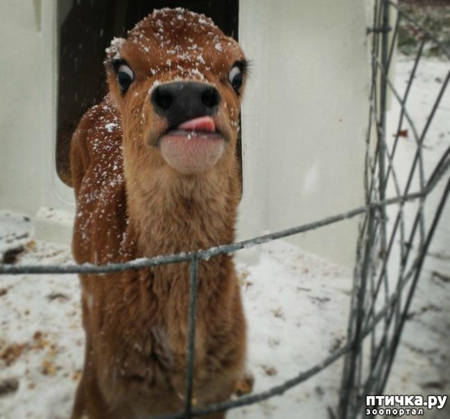 фото 4: У животных тоже бывают фотографии, которые они захотели бы срочно удалить