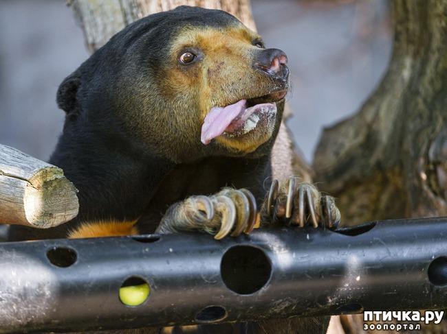 фото 11: У животных тоже бывают фотографии, которые они захотели бы срочно удалить