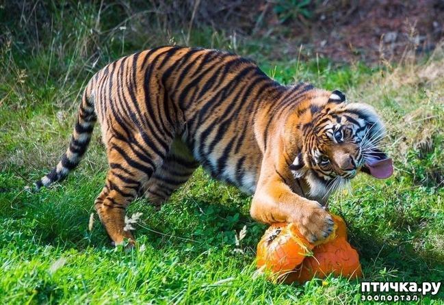 фото 17: У животных тоже бывают фотографии, которые они захотели бы срочно удалить