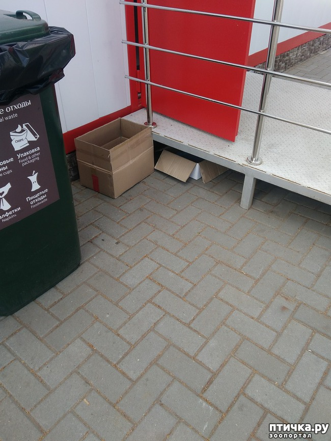 фото 4: Еще раз о потерявшейся трехцветной кошке в Самаре. Или Fifa.