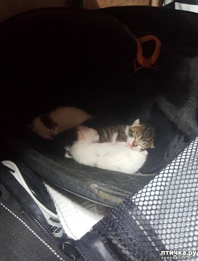 фото 3: Хоккеист нашел в своей сумке очаровательный сюрприз от местной бродячей кошки)))