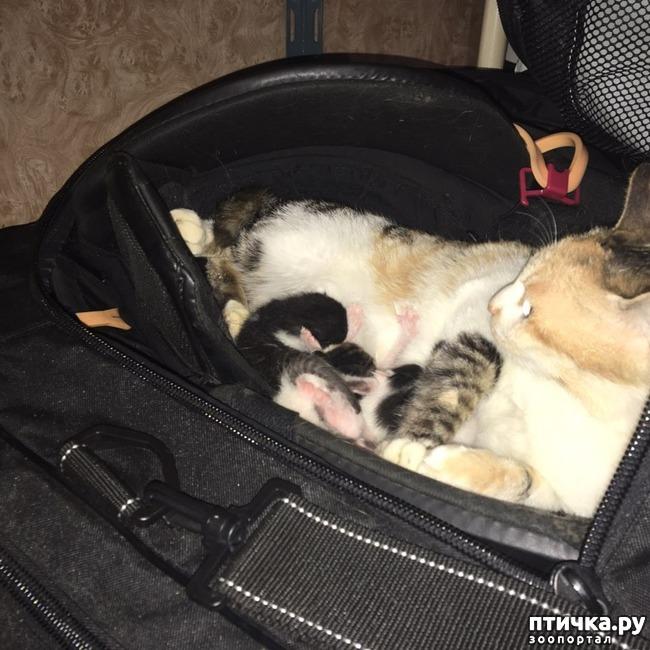фото 5: Хоккеист нашел в своей сумке очаровательный сюрприз от местной бродячей кошки)))