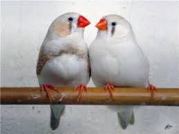фото 8: Лучшие птицы для содержания дома.