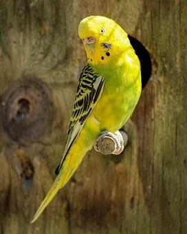 фото 1: Лучшие птицы для содержания дома.
