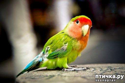 фото 2: Лучшие птицы для содержания дома.