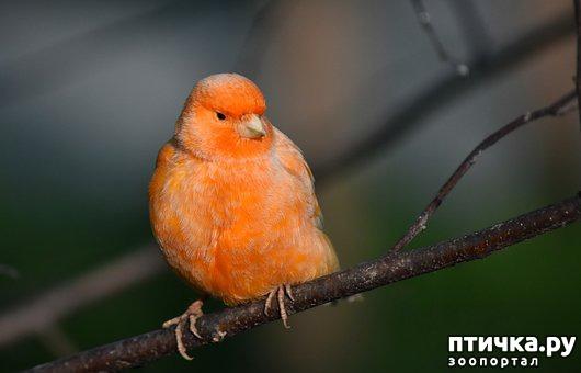 фото 5: Лучшие птицы для содержания дома.