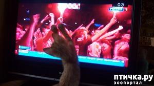 фото: Футбольный кошачий фанат
