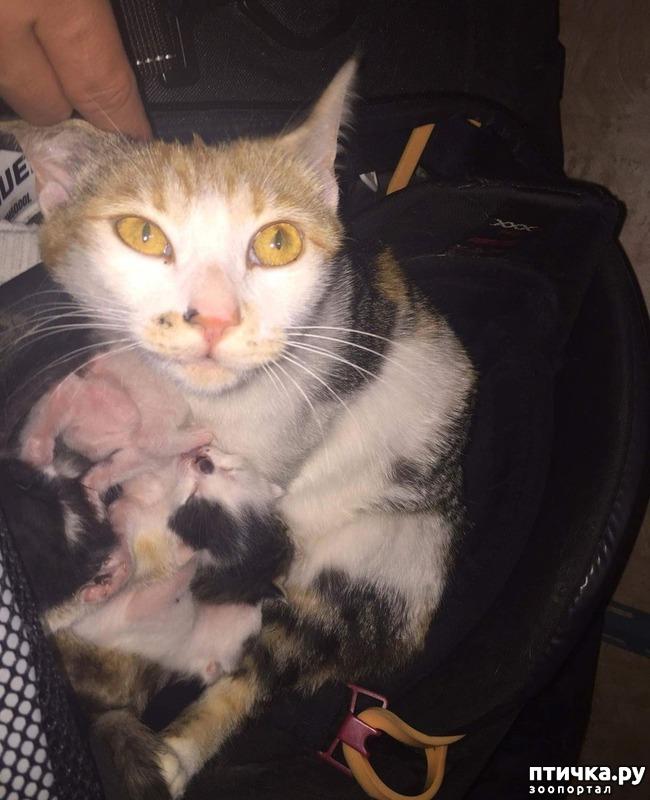фото 1: Хоккеист нашел в своей сумке очаровательный сюрприз от местной бродячей кошки)))