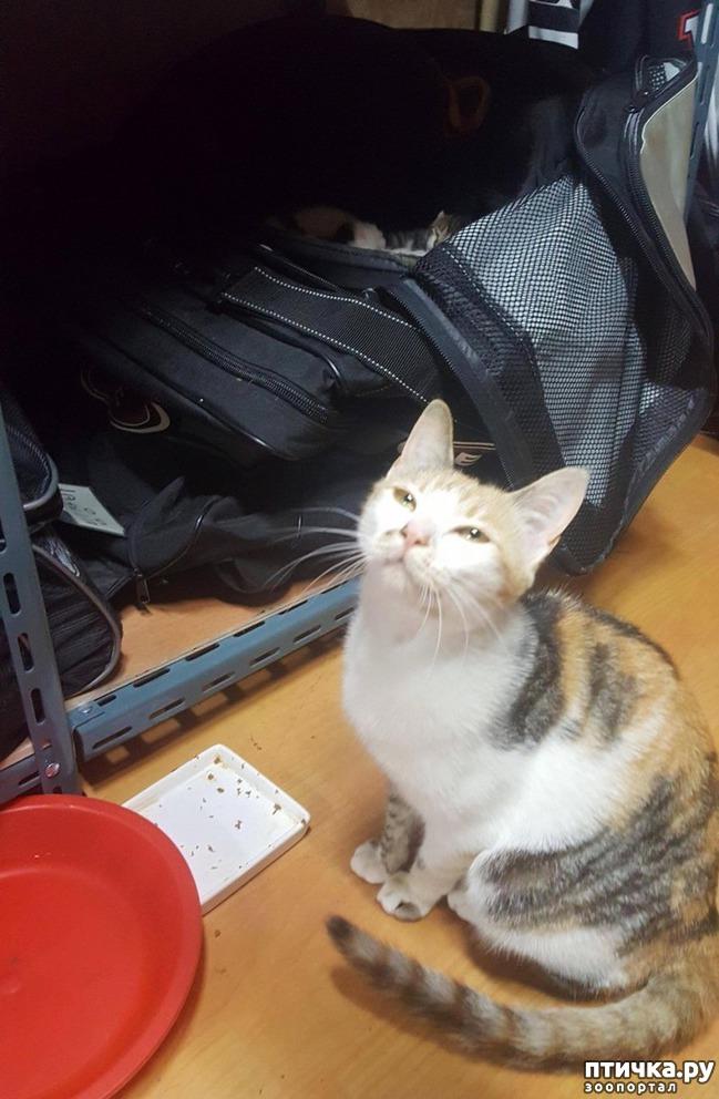 фото 2: Хоккеист нашел в своей сумке очаровательный сюрприз от местной бродячей кошки)))