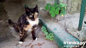 фото: Стерилизация кошек