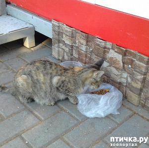 фото: Трехцветная кошка Фифа и фифята. Завершение.