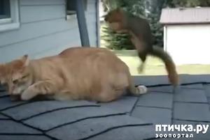 фото: Кот и белка нашли друг друга)))