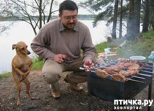 фото: Собаки - попрошайки)))