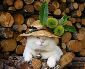 фото: Котоматрица: Кот и огород-3.