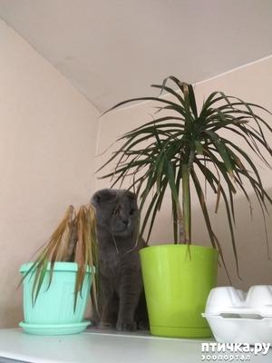 фото: Кошка и драцена