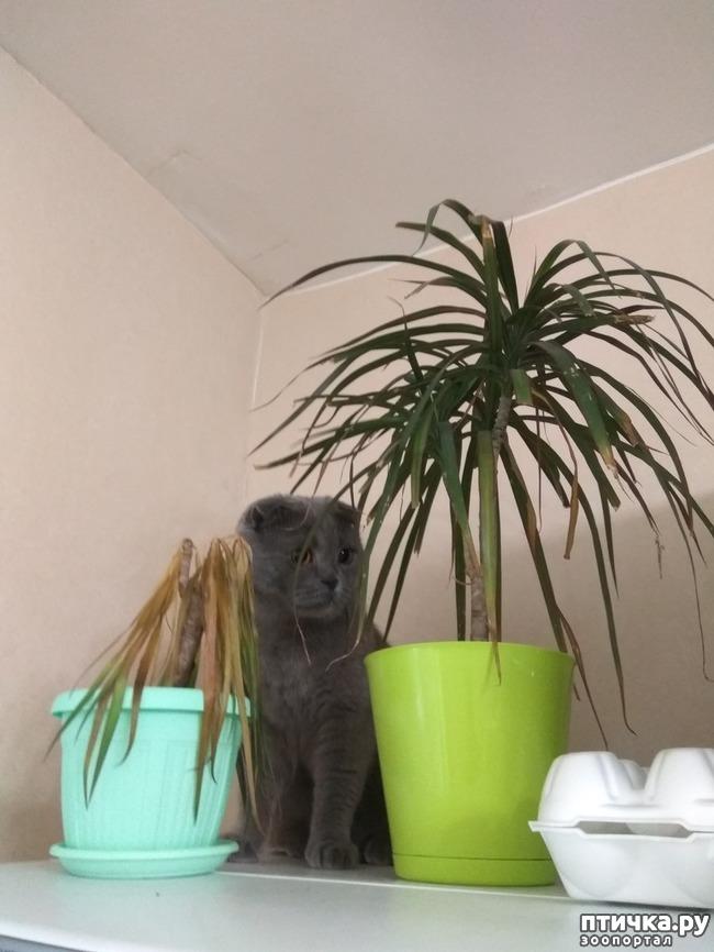фото 1: Кошка и драцена