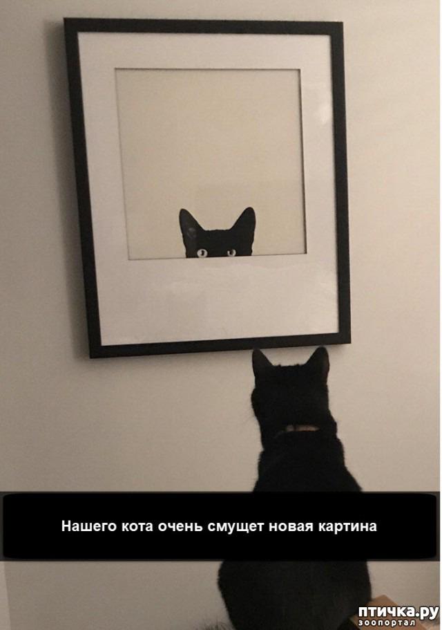 фото 15: Смешные коты. Подборка к выходным.