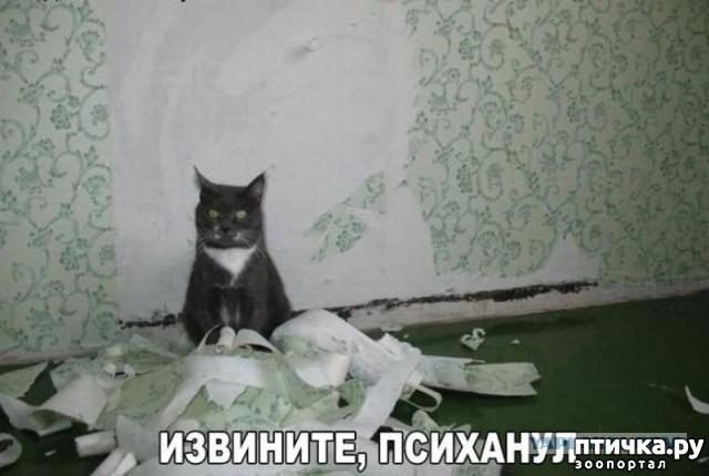 фото 16: Смешные коты. Подборка к выходным.