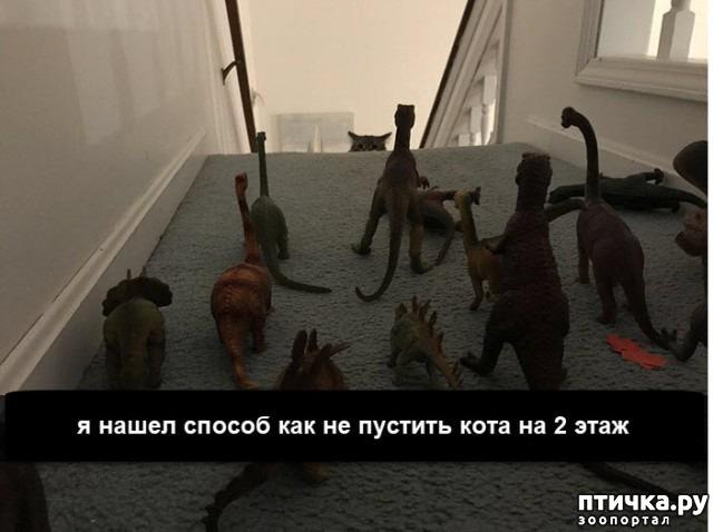 фото 17: Смешные коты. Подборка к выходным.