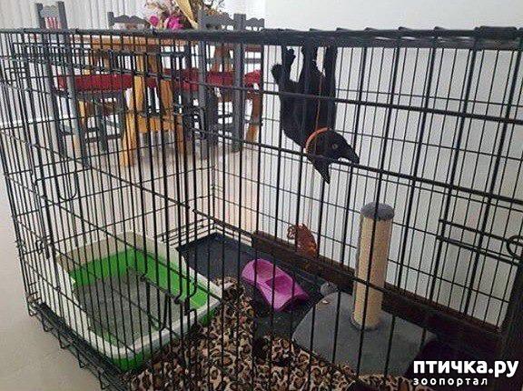 фото 18: Смешные коты. Подборка к выходным.