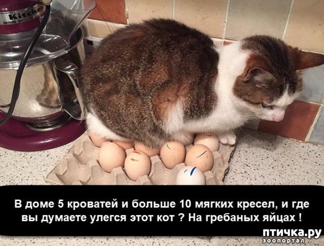 фото 19: Смешные коты. Подборка к выходным.