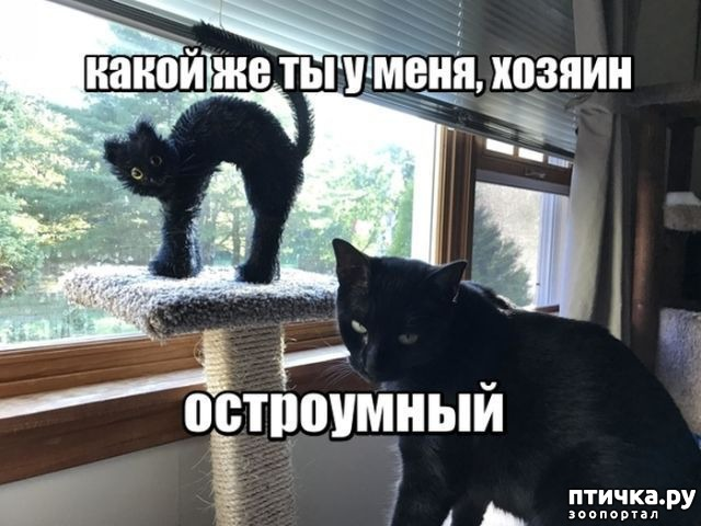 фото 1: Смешные коты. Подборка к выходным.