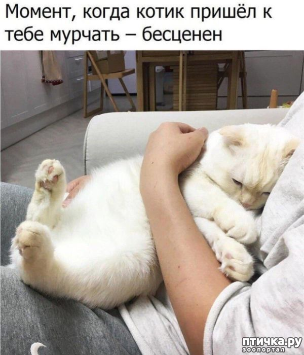фото 2: Смешные коты. Подборка к выходным.