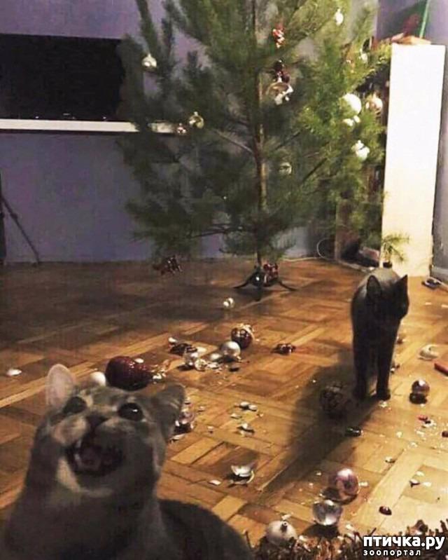 фото 4: Смешные коты. Подборка к выходным.