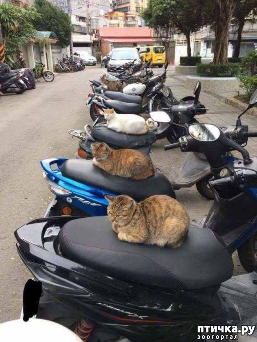 фото 5: Смешные коты. Подборка к выходным.