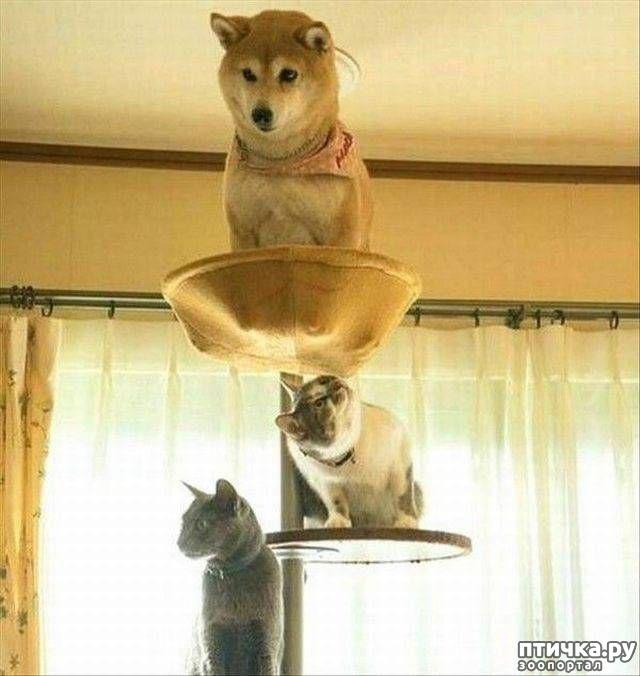 фото 10: Смешные коты. Подборка к выходным.