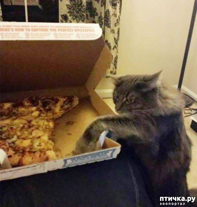 фото 11: Смешные коты. Подборка к выходным.
