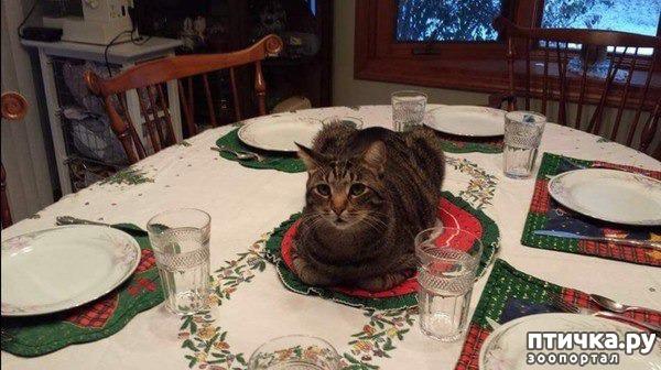 фото 9: Смешные коты. Подборка к выходным.