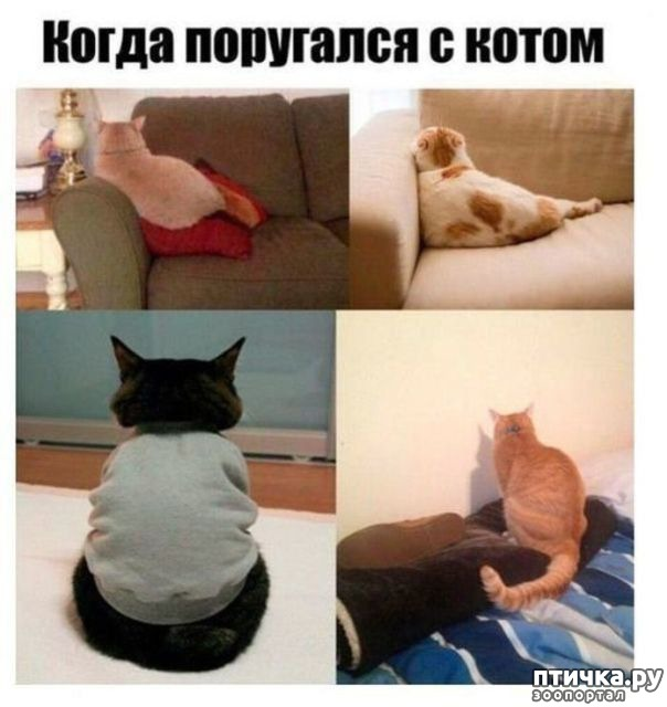 фото 12: Смешные коты. Подборка к выходным.