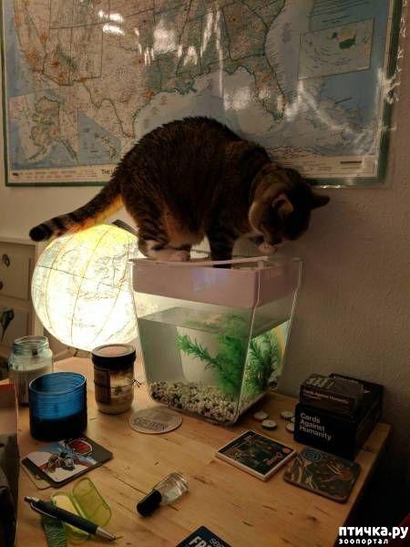 фото 13: Смешные коты. Подборка к выходным.