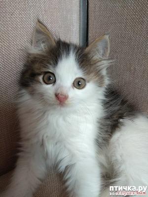 фото: А где-то рыдает психиатр... (+видео котенка)