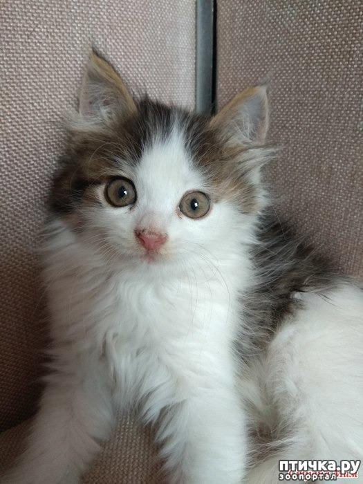 фото 1: А где-то рыдает психиатр... (+видео котенка)