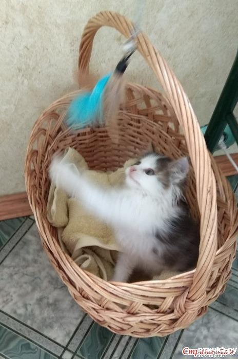 фото 2: А где-то рыдает психиатр... (+видео котенка)