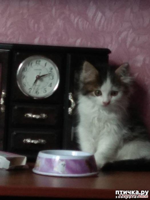 фото 3: А где-то рыдает психиатр... (+видео котенка)