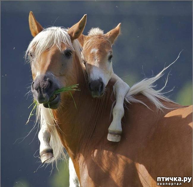 фото 1: Мамочки и детки домашних животных