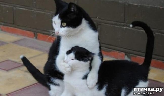 фото 4: Мамочки и детки домашних животных