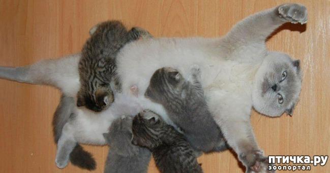 фото 5: Мамочки и детки домашних животных