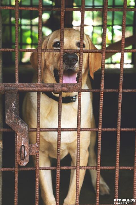 фото 1: Клетка для собаки: плюсы и минусы.
