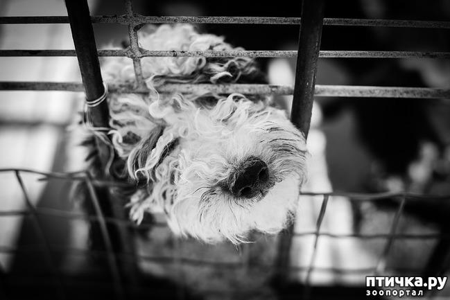 фото 3: Клетка для собаки: плюсы и минусы.