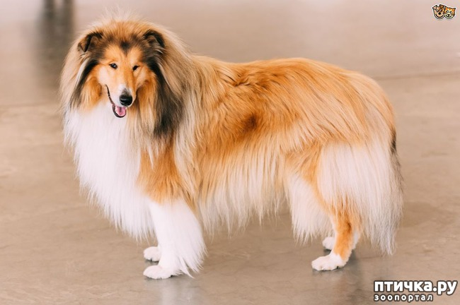 фото 3: Откуда берётся боязнь собак и как с ней бороться? (сам себе психолог)