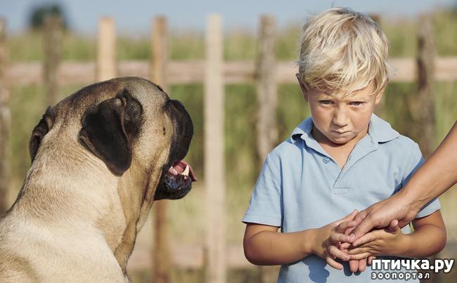 фото 1: Откуда берётся боязнь собак и как с ней бороться? (сам себе психолог)