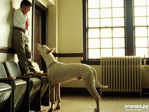 фото 2: Откуда берётся боязнь собак и как с ней бороться? (сам себе психолог)