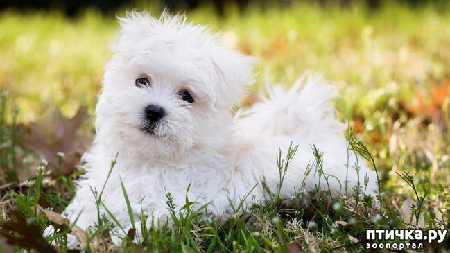 фото 4: Откуда берётся боязнь собак и как с ней бороться? (сам себе психолог)