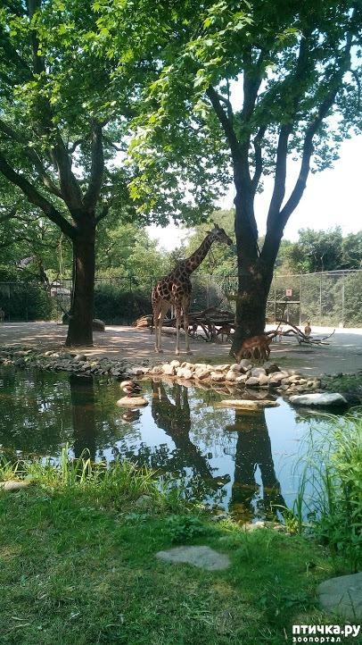 фото 27: Как я прошлась по зоопаркам